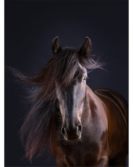 Mark Harvey has photographed equine subjects all around the world
