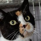 Could you give Kissy the cat a home?