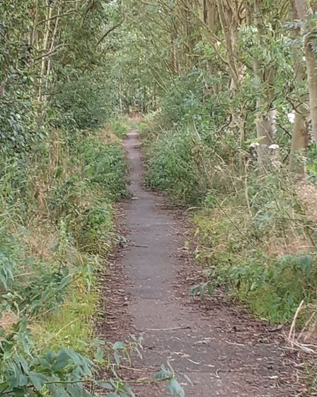 The overgrown path between Thurston and Beyton before the work was carried out