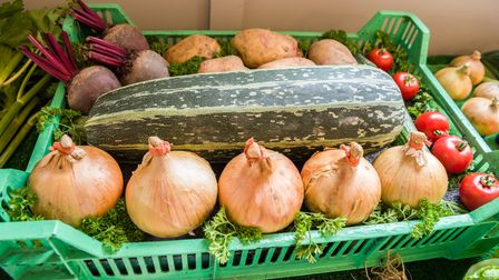 Onions, marrow, beetroot, potatoes and tomatoes at the Autumn Exhibition, Dunmow Horticultural Society, Essex