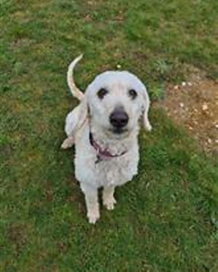 Bella is looking for a quiet home with no other animals and adult only owners