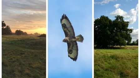 A buzzard captured in flight over Wenny Meadows, Chatteris, where a bid to build 93 homes is causing a storm.
