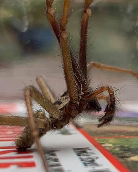 Spiders have already begun to make their homes in Norfolk.