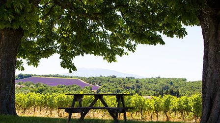 A picnic table with a view of vines and lavender (c) Indra Van Regemorter