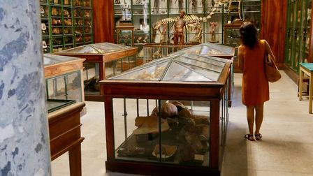 The museum is part of Montpellier's medical school. Pic: Stephen Turnbull