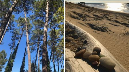 Fuzzy loves the pine forests and beaches in Landes © Fuzzy Jones