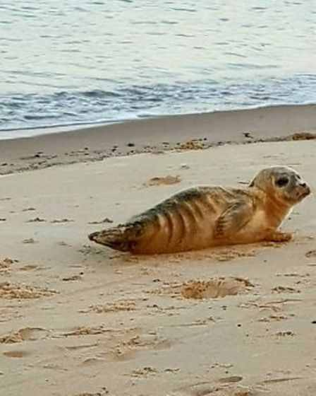 A dog was seen attacking a seal on South Beach in Great Yarmouth.