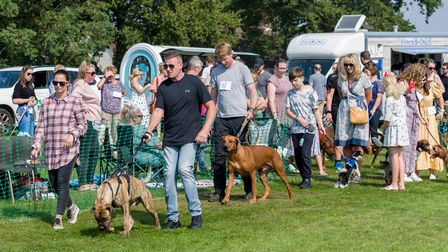 People with dogs on leads on a grass field, Felsted fun dog show, Essex