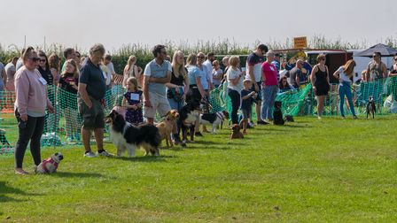 People and dogs standing on the grass, Felsted fun dog show, Essex