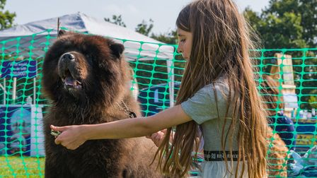 A young girl holding treats in her hand and a dog at Felsted fun dog show, Essex