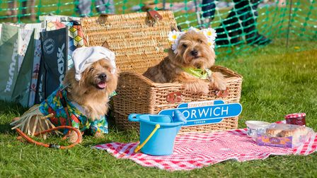 Two dogs dressed for a summer heat wave, a picnic blanket and scones, Felsted fun dog show, Essex
