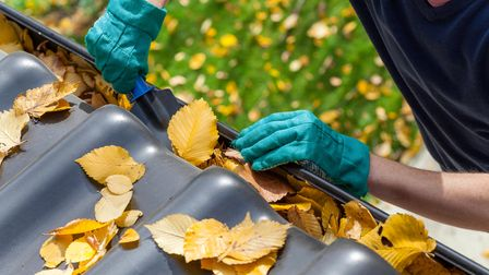 Man wearing gloves and cleaning the gutter from autumn leaves