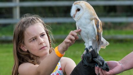 A girl strokes and owl which sits on its perch at the Flitch Green Fun Day 2021, Essex