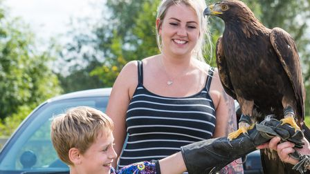 A golden eagle, Morpheus, sits on a boy's hand at Flitch Green Fun Day 2021, Essex
