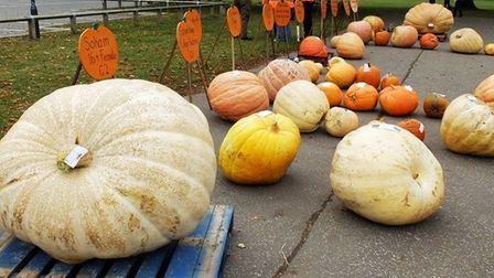 Big is better - at least at Soham pumpkin fair which returns on Saturday September 25