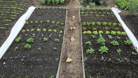 Trial beds in mid May after sun and warmth, with the dig bed on the left and the no dig on the right