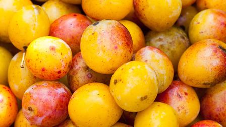 Mirabelle plums of Lorraine (c) Pixavril / Getty Images