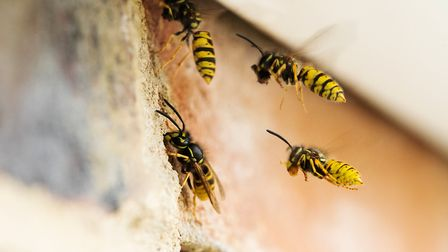 Wasp stings can potentially be fatal, and it is important for farmers to understand the risks associ