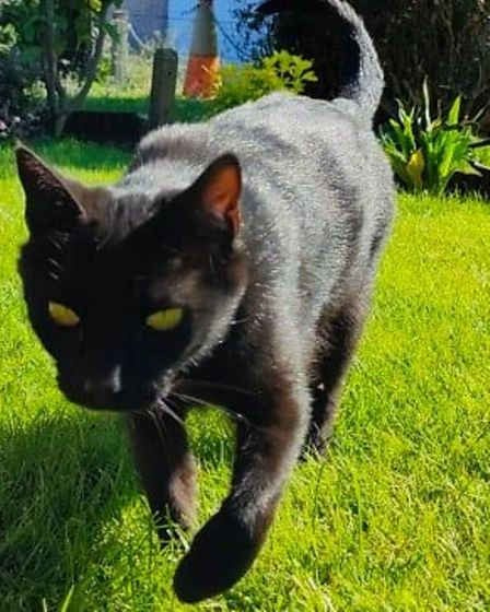 Tilly the cat from Wimblington who was shot in the eye