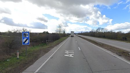 The A11 outside Mildenhall has been shut after pigs escaped onto the carriageway
