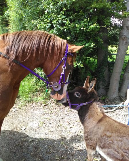 A miniature donkey with a horse