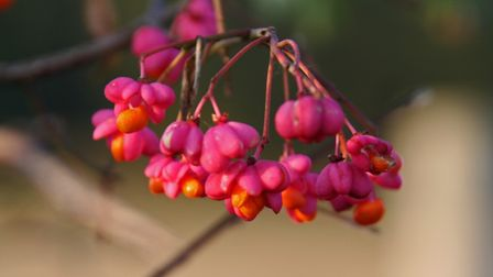 Bright and colourful spindle