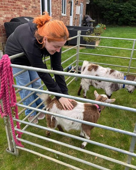 Goats meet people at a Cherry Tree Farm Goats at Home event.