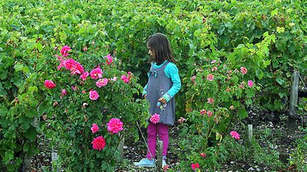 Jennifer's youngest daughter explores the vineyards