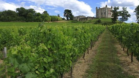 With more than 800,000 hectares of vineyards across the country, France has plenty of options to cho