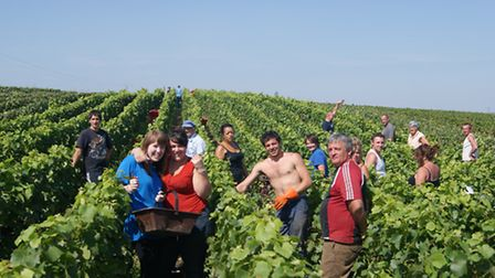 Rachel and Alexis are joined in September by a team of workers to harvest the grapes, a process taki