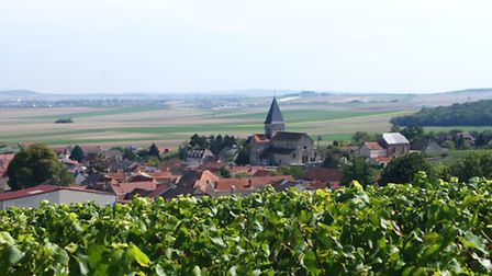 The village of Sacy from across the vines