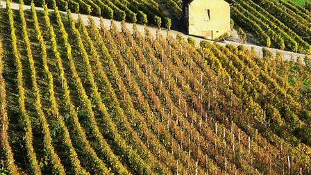 Planning to visit a vineyard? Check out these tips to make the most of your visit
