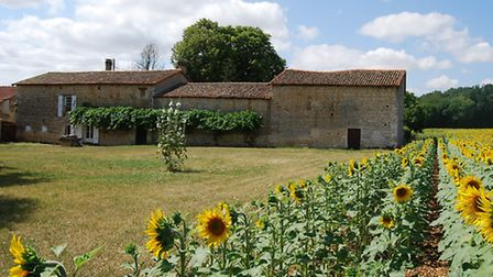 Fields of sunflowers are synonymous with Charente