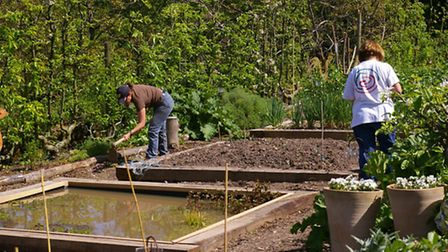 Working on the raised beds