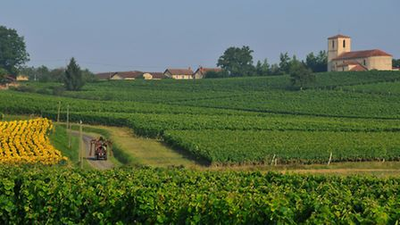 Vineyards around Maumusson-Laguian (©Collection Tourisme Gers/CDRP/A. Caillou)