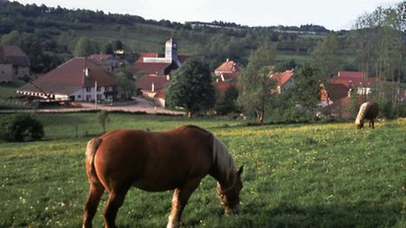 Having horses on your land can be very pretty