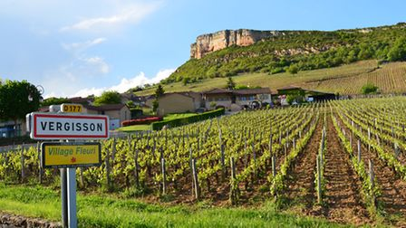 the village and vineyards of Vergisson © Dominic Rippon