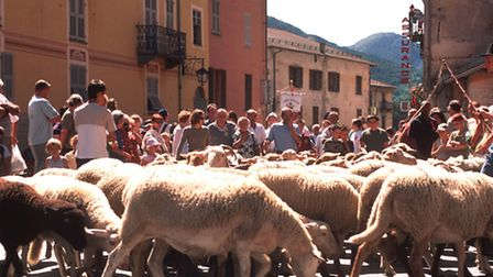 Sheep fill the streets of Tende during the transhumance