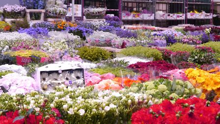Flowers at the Marché de Rungis © Eve Middleton