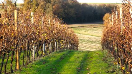 Charente-Maritime is home to beautiful countryside