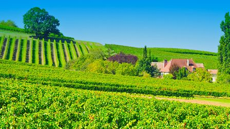 The Romans were responsible for introducing vines around Bordeaux
