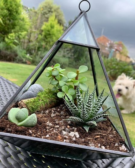 One of the terrariums design by Sam Bayfield.