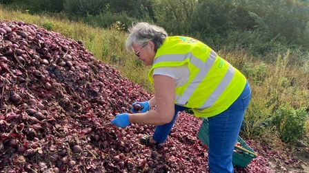 FACT Volunteers spent the day picking the onions, and then took them back to the community fridge for people to collect.