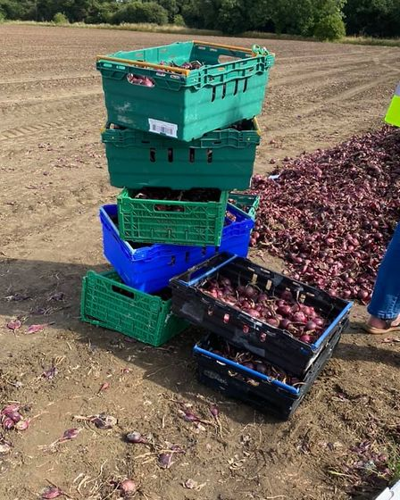 The FACT volunteers filled a bus full with the crates of onions they'd picked for the community fridge.