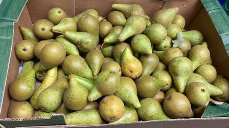 Whilst collecting at the orchard, the volunteers managed to pick up some pears for the community hub too.