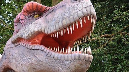 Test your dinosaur knowledge in our photo quiz.