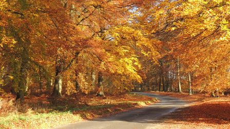 Experience the colours of autumn in Thetford Forest