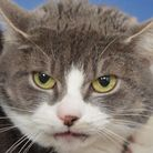 Storm will need a patient home as she is a little fearful.