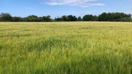 Barley field in Bloomstile Lane, Salthouse, which sold at Brown & Co's autumn property sale