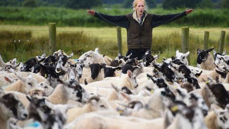 The Suffolk Shepherdess, Tilly Abbott, 21, herding the ewes and lambs for weaning at Kessingland